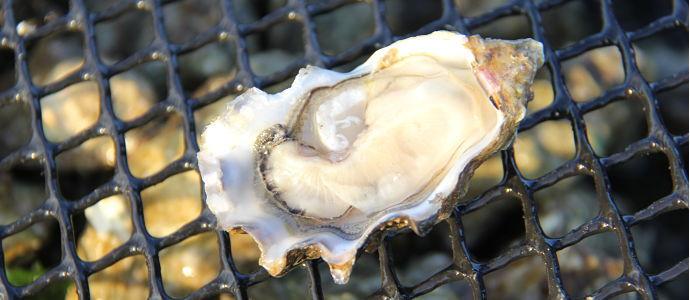 L'huître au fil des saisons